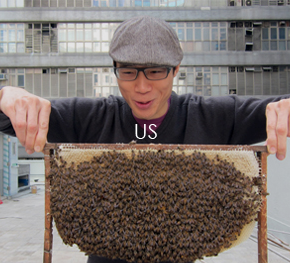 HK Honey - The art of urban Beekeeping